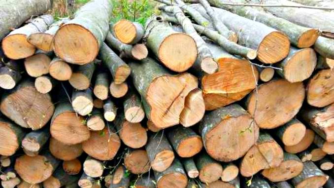 Cererile pentru lemnele de foc se depun din 4 ianuarie