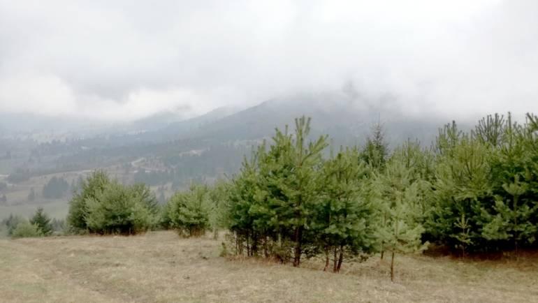 Aproximativ 40 de ha vor fi împădurite la Săcele anul acesta