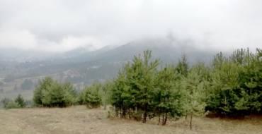 Peste 30 de ha de pădure vor fi plantate pe raza Municipiului Săcele