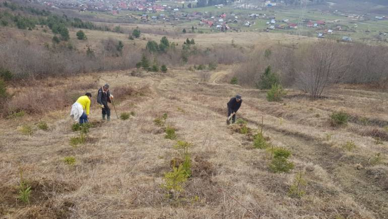 Peste 24 ha au fost reîmpădurite la Săcele în această primăvară