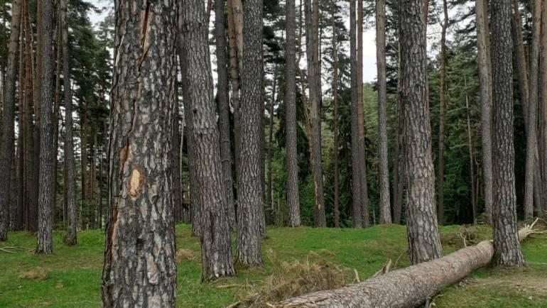 Recoltare copaci doborâți de vânt, Poiana Angelescu-Valea Largă