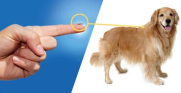 Campanie de sterilizare și microcipare GRATUITĂ a câinilor cu stăpân
